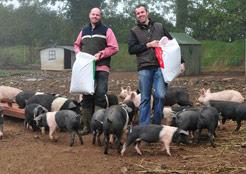Castlemine Farm, Roscommon